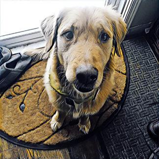 Friendly Golden Retriever Dog